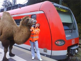 Kamele Zug
